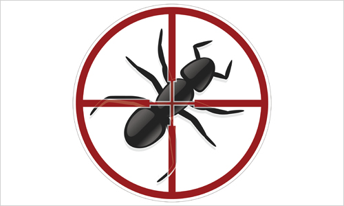 Ant Pest Control Norfolk