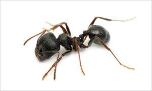 Ant control Virginia Beach