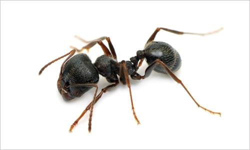 Termite Baiting Prices
