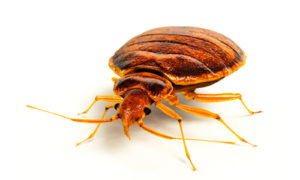Bed bug Treatment Chesapeake