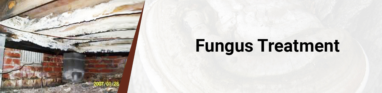 fungi treatment