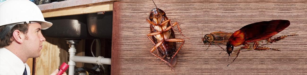 Roach Control Virginia Beach
