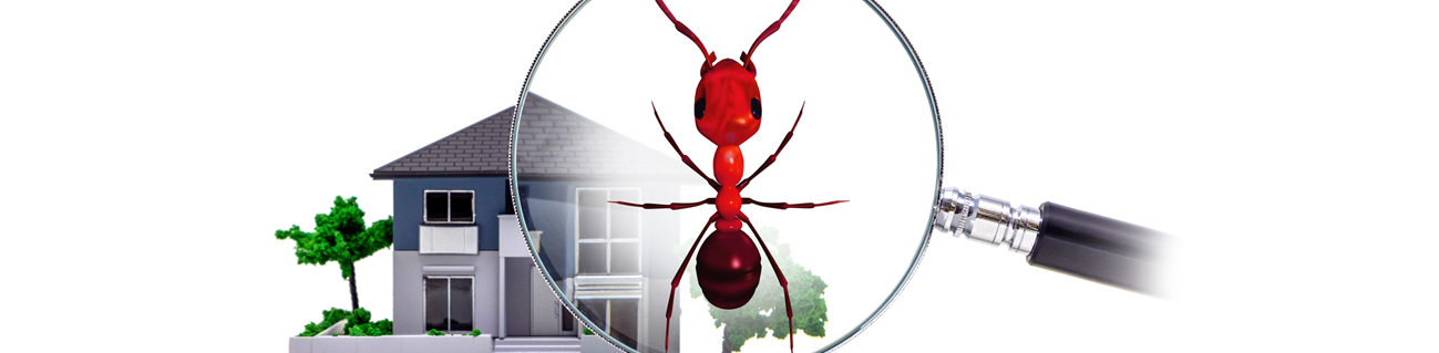 ant pest control chesapeake