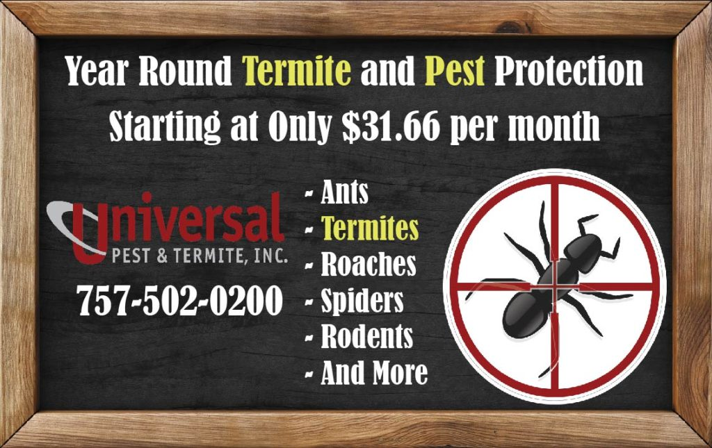 Termite Pest Control Service Prices