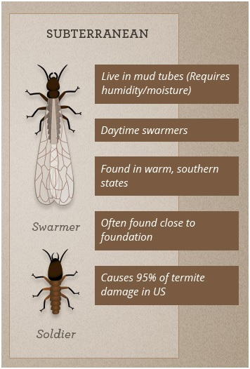 Termite Identification