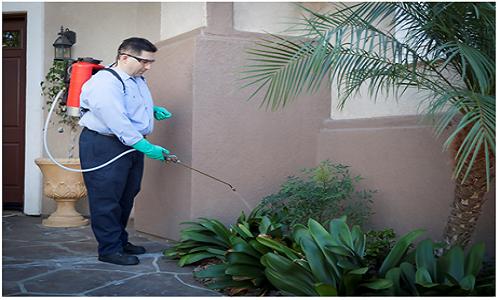Exterior Pest Control