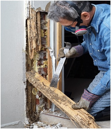 Termite Control Virginia Beach